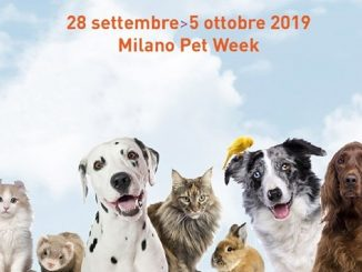 Pets in the city 2019