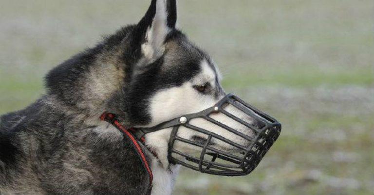 obbligo museruola cani milano