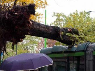 albero cade su un tram