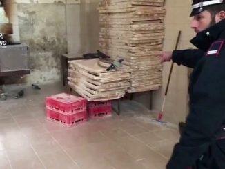 Panificio chiuso a Milano: trovati escrementi di topi e piccioni sulla farina