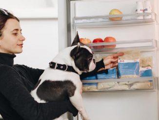 Cibo a domicilio per cani: a Milano si può grazie a Dog Heroes