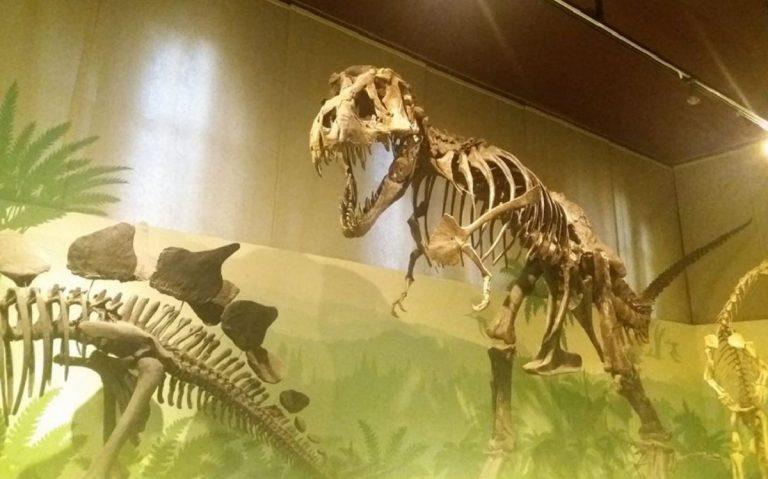 museo di storia naturale milano