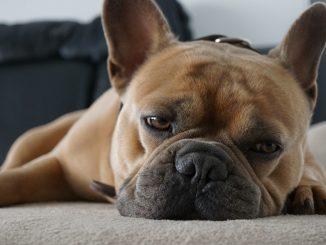 Cosa fare con il cane a Milano: 10 idee imperdibili