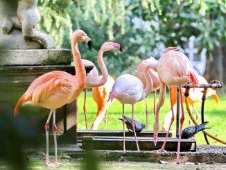 Villa Invernizzi a Milano: il parco con i fenicotteri rosa