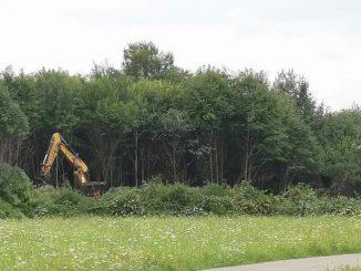 """Vasca di laminazione contro le esondazioni, abbattuti alberi al Parco Nord: """"Uno scempio"""""""