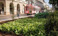 Milano, arriva il garante del verde: vigilerà sul consumo del suolo